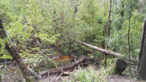 Cecelia forest
